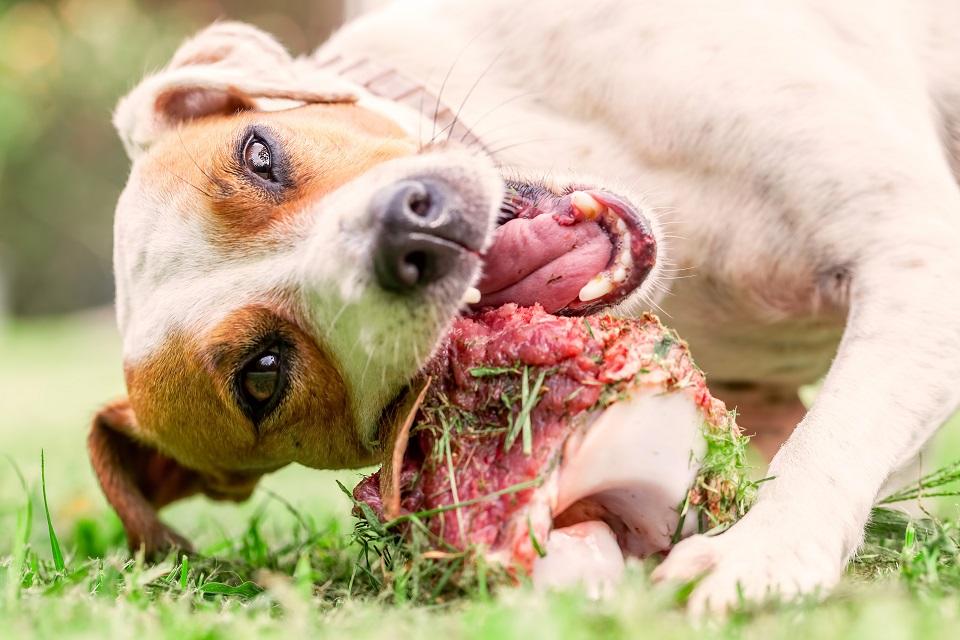 Quelles protéines animales donner à son chien