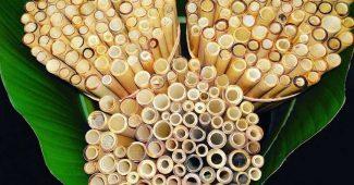 Les 2 meilleures alternatives des pailles en plastique